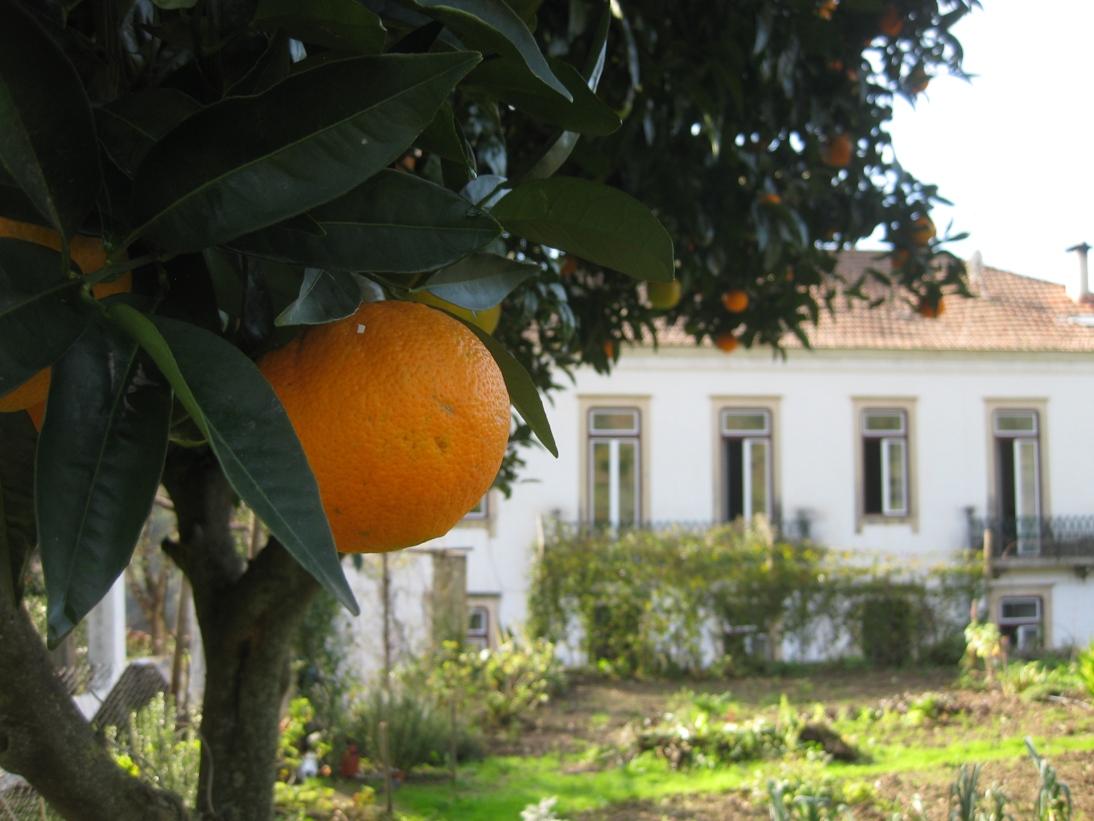 10_house_from_garden