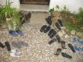 yoga studio shoes small